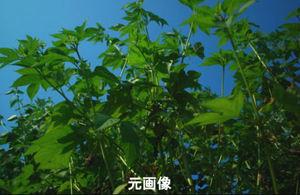 青空と青草の写真