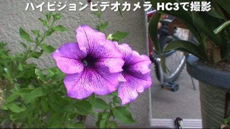 ハイビジョンで撮影した花