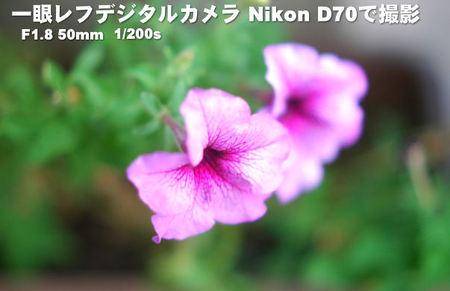 一眼レフF1.4で撮影した花